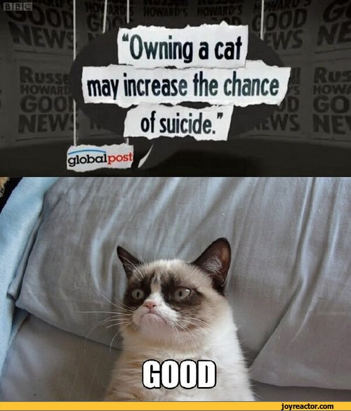 lol cats grumpy 