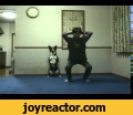 Crouching dog, ,Entertainment,animals,fun,,fight,,cats,,,dogs,