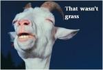 That wasn't grass