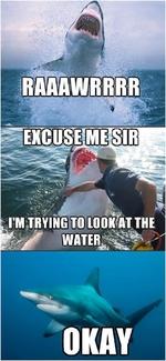 RAAAAAWRRR! excuse me sir, I 'm trying to look at the water. okay.