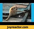 Funny dogs vs water moments