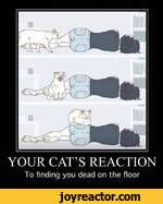 YOUR CATS REACTIONTo finding you dead on the floor