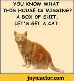you KNOW WHAT THIS HOUSE IS MISSING? A BOX OF SHIT. LET'S GET A CAT.