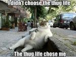 i didn't choose the thug life the thug life chose me