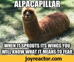 alpacapillar when it sprouts its wings you will know what it means to fear